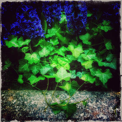 Photograph - A Touch Of Blue - Flowers Of Spring by Miriam Danar