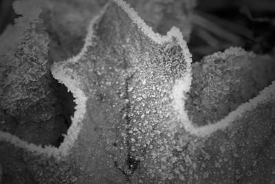 Photograph - A Touch Of Frost B N W by Richard Andrews