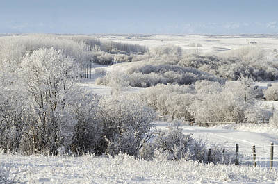 Photograph - A Touch Of Frost by Dee Cresswell