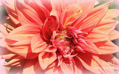 Photograph - A Touch Of Gold On Coral Dahlia by Dora Sofia Caputo Photographic Design and Fine Art