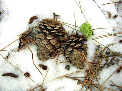 Pine Cones Photograph - A Touch Of Moss by Will Borden