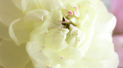 Photograph - A Touch Of Pink by Wendy Wilton