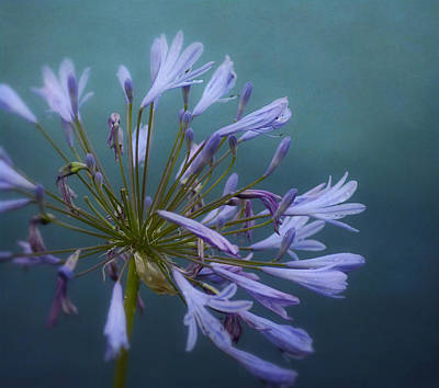 Photograph - A Touch Of Purple by Fraida Gutovich