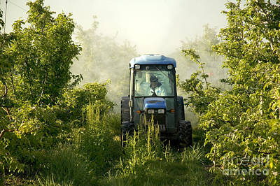A Tractor Spraying An Apple Orchard Art Print by Inga Spence