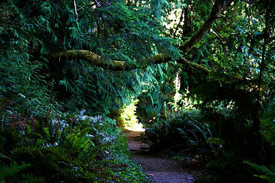 Photograph - A Trail Along Lake Crescent - Spruce Railroad Trail - Washington by Marie Jamieson