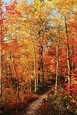 Photograph - A Trail To Autumn by James Kirkikis
