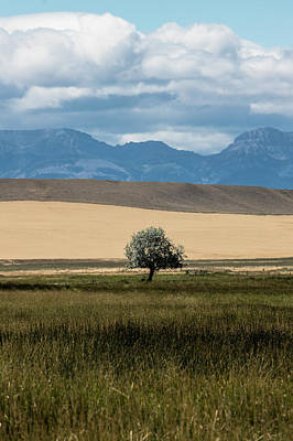 Photograph - A Tree Alone In Montana  by John McGraw