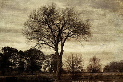 Photograph - A Tree Along The Roadside by David Yocum