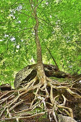 Photograph - A Tree And It's Roots by Lisa Wooten