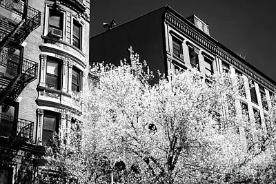 Photograph - A Tree Grows In Little Italy by John Rizzuto
