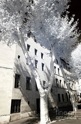 Photograph - A Tree Grows In Marseille by John Rizzuto