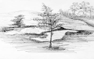 Drawing - A Tree Grows In Sydney-sketch by VIVA Anderson