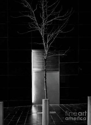 Photograph - A Tree Grows In The City - Bw by James Aiken