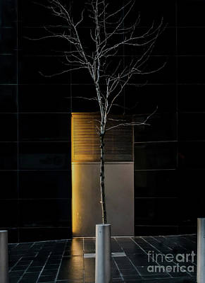 Photograph - A Tree Grows In The City by James Aiken