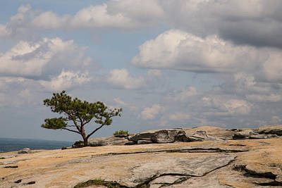 Photograph - A Tree Grows Out Of Stone by Karol Livote