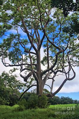 Print featuring the photograph A Tree In Paradise by DJ Florek