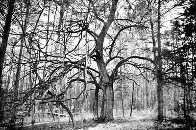 Photograph - A Tree In The Forest Black And White by Lisa Wooten