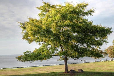 Photograph - A Tree In The Park Bristol Ri by Tom Prendergast