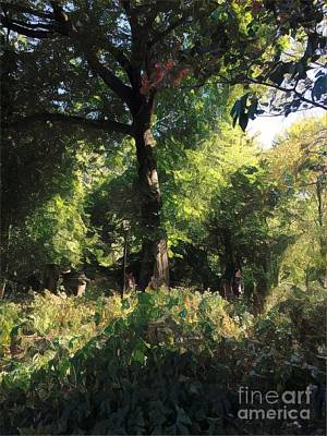 Photograph - A Tree In The Park - Central Park New York by Miriam Danar
