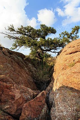 Photograph - A Tree In The Rocks by Richard Smith