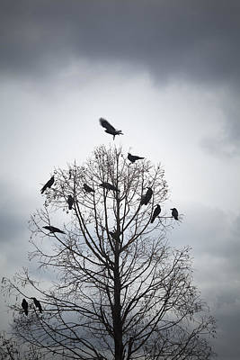 Flock Of Bird Photograph - A Tree In Which Many Crows Have Rest by Hiroshi Watanabe