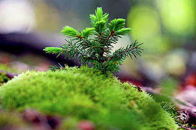 Photograph - A Tree Is Born by Meta Gatschenberger