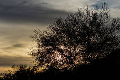 Photograph - A Tree Silhouette by Douglas Killourie