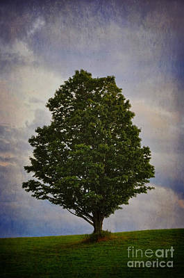 Photograph - A Tree Stands Alone On A Hill by Debra Fedchin
