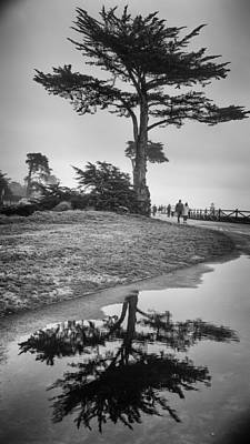 Photograph - A Tree Stands Tall by Lora Lee Chapman