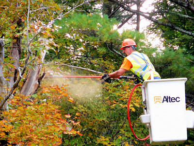 Pruning Painting - A Tree Surgeon Cuts And Trims A Tree 1 by Lanjee Chee