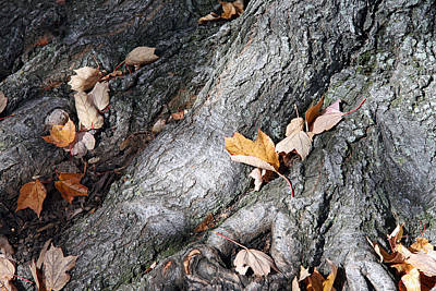 Photograph - A Tree Trunk With Its Fallen Leaves by Cora Wandel