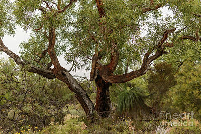 Photograph - A Tree  by Werner Padarin