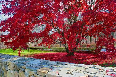 Photograph - A Tree's Red Skirt by Polly Castor