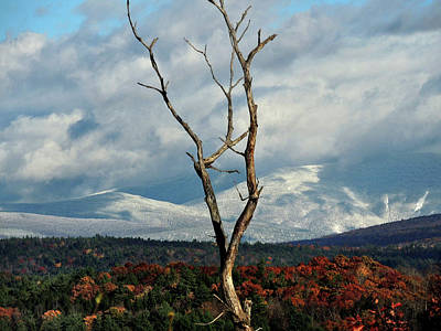 Photograph - A Trees View by Nancy Griswold