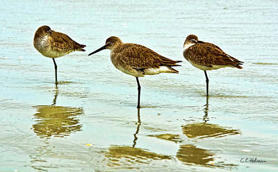 Photograph - A Trio by Christopher Holmes