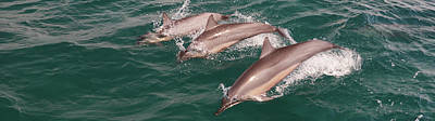 Photograph - A Trio Of Dolphins by Jerry Kalman