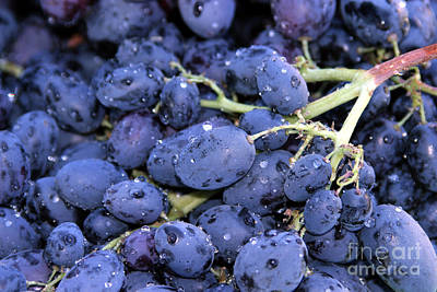A Trip Through The Farmers Market Featuring Purple Grapes. Art Print