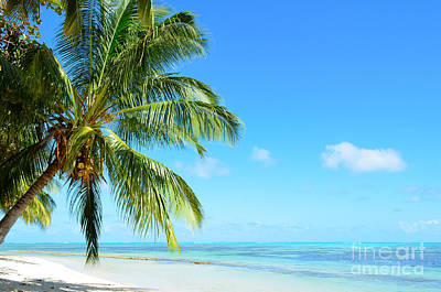 Photograph - A Tropical Palm Tree Beach by IPics Photography