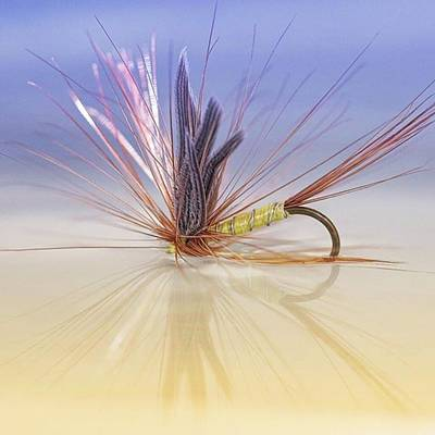Wall Art - Photograph - A Trout Fly (greenwell's Glory) by John Edwards