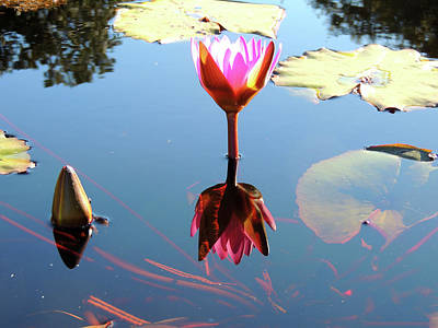 Photograph - A True Reflection by Marilyn Holkham