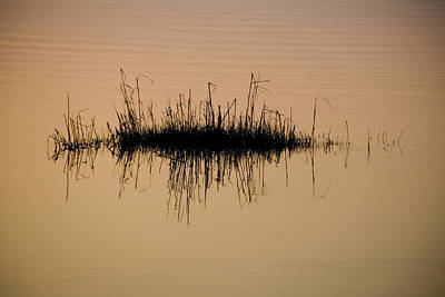 Hatteras Island Photograph - A Tuft Of Grass Reflected In The Gold by Stephen St. John