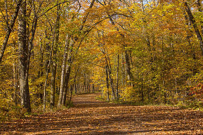 Itasca State Park Photograph - A Tunnel Of Color by Tim Grams