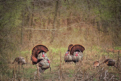 Photograph - A Turkey Hunters Dream by Susan Rissi Tregoning