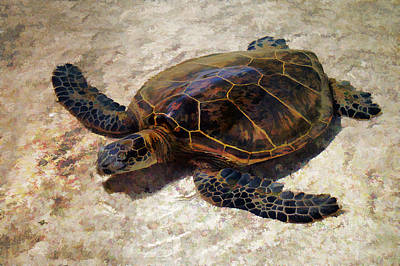 Photograph - A Turtles Life by Pamela Walton