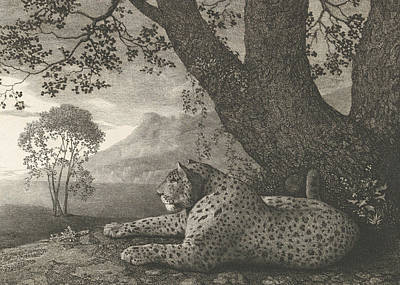 Relief - A Tyger  by George Stubbs