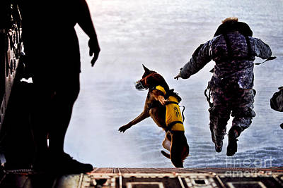 Animals Photos - A U.s. Soldier And His Military Working by Stocktrek Images