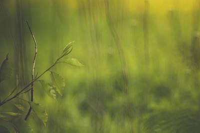 Photograph - A Veil Of Green by Joni Eskridge