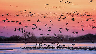 Birds Rights Managed Images - A Vibrant Evening Royalty-Free Image by Susan Rissi Tregoning