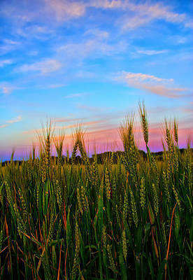 Wheat Field Sky Photograph - A View From Crop Level by Bill Tiepelman