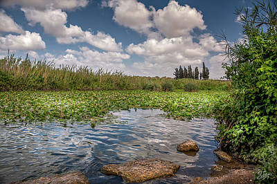 Photograph - A View Of Yarkon Park by Endre Balogh